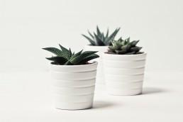 Idée de décoration de salle bain, plantes vertes.